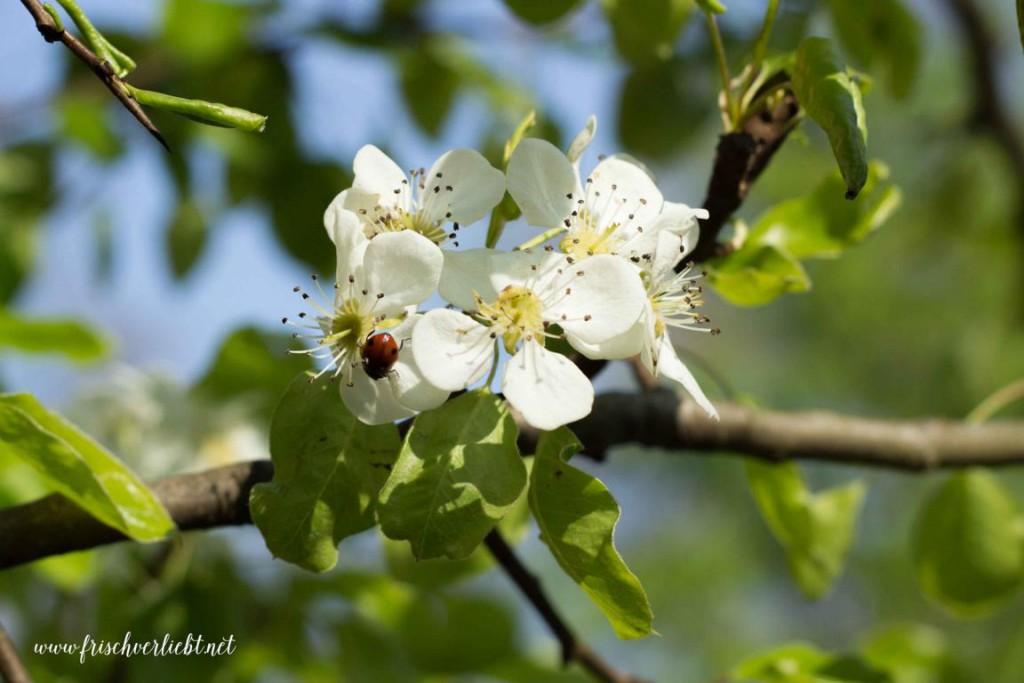 Foto_der_Woche_Blumen_Frisch_Verliebt